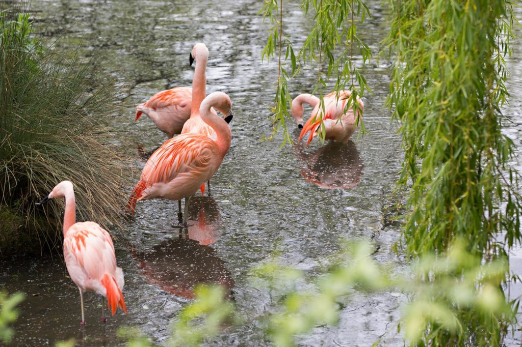Amazona Zoo