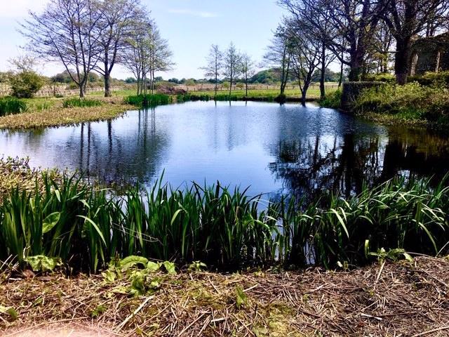 Tranquil North Norfolk