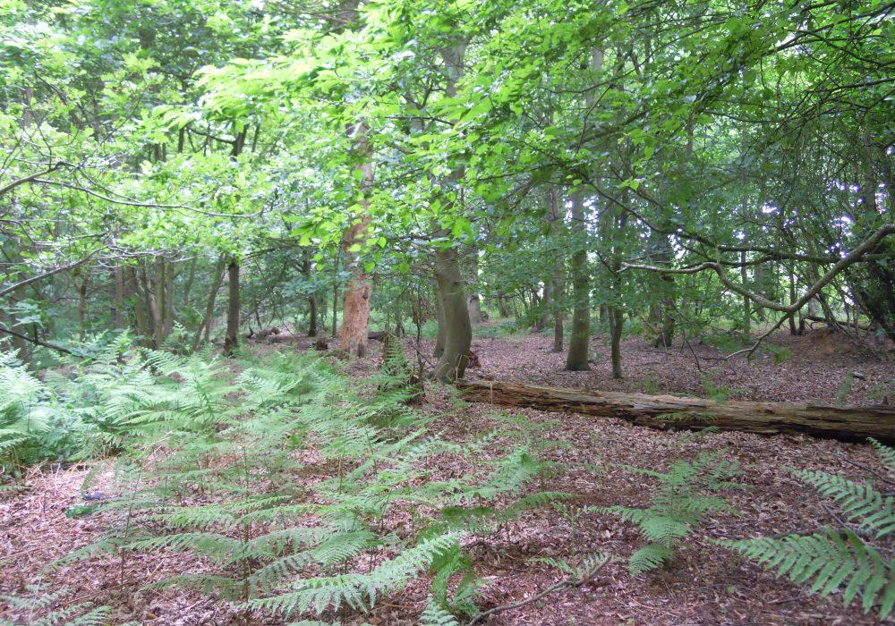 Cromer Nature Reserve